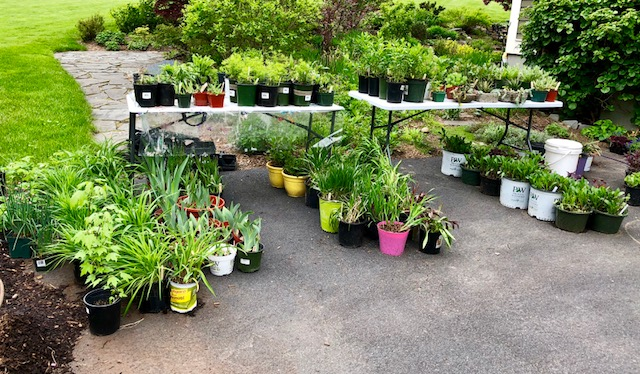 SGC_Outdoor_Plant18