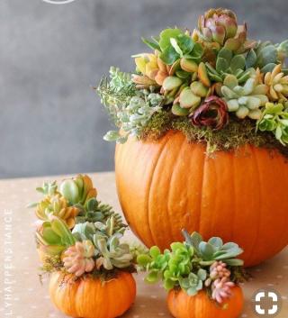 SGC_Bemis succulents_pumpkin